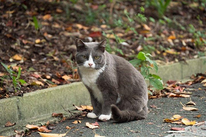 ようやく訪れた秋を愛でる桜猫たち_d0353489_22132716.jpg