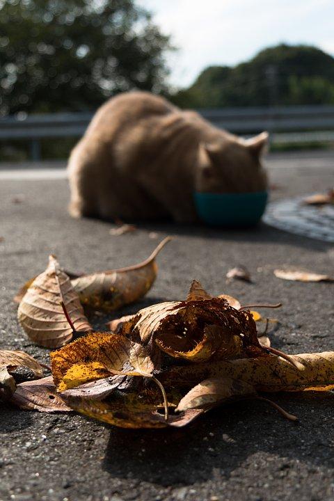 ようやく訪れた秋を愛でる桜猫たち_d0353489_2216995.jpg