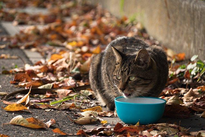ようやく訪れた秋を愛でる桜猫たち_d0353489_22725100.jpg