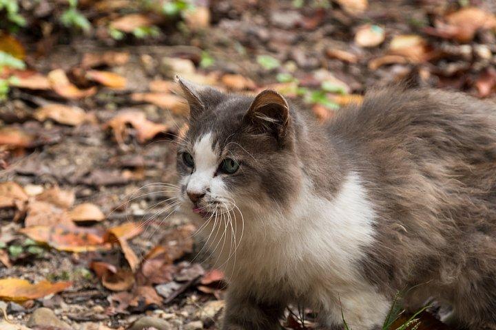 ようやく訪れた秋を愛でる桜猫たち_d0353489_2291815.jpg