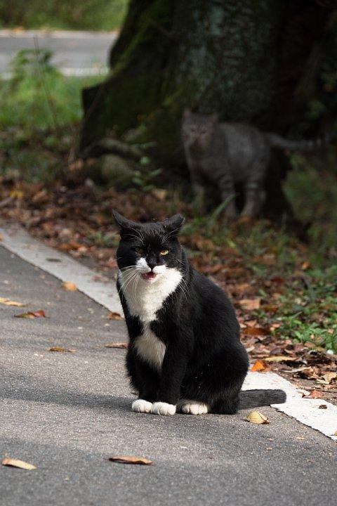 ようやく訪れた秋を愛でる桜猫たち_d0353489_2295131.jpg