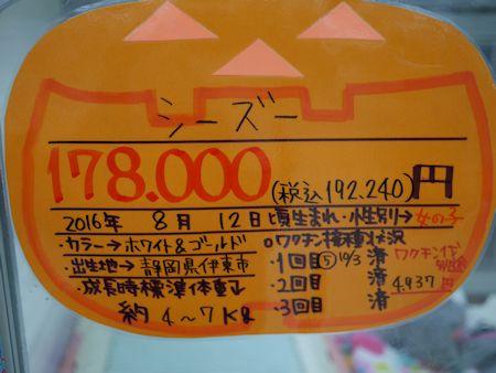 望遠レンズ買ったけど&HCのワンコたち_c0090198_17404085.jpg
