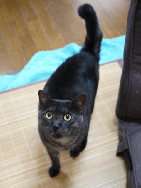 猫のお留守番 若くん姫ちゃん編。_a0143140_2121229.jpg