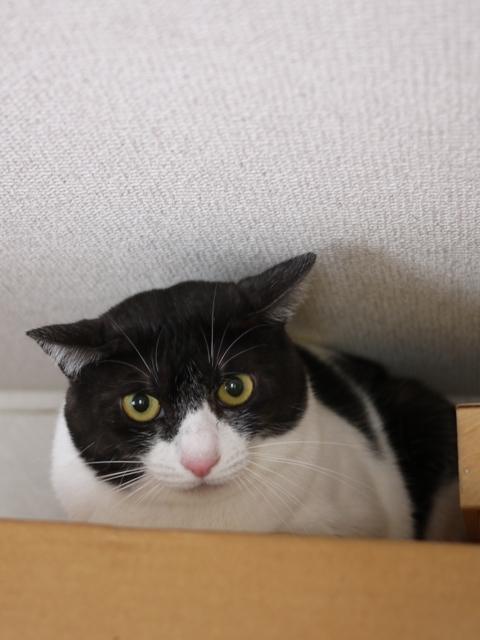 猫のお留守番 若くん姫ちゃん編。_a0143140_2123876.jpg
