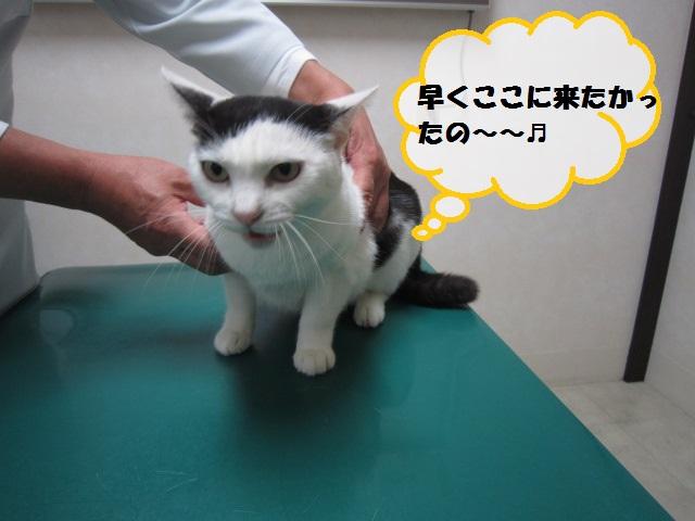 【自分でゲージに入って待っていた猫】_b0059154_12214835.jpg