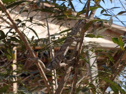 4日目: モロンダバ(バオバブ&キリンディ国立公園)_a0207588_21384784.jpg