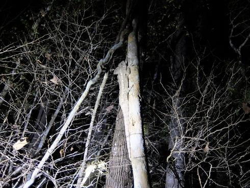 4日目: モロンダバ(バオバブ&キリンディ国立公園)_a0207588_2213528.jpg