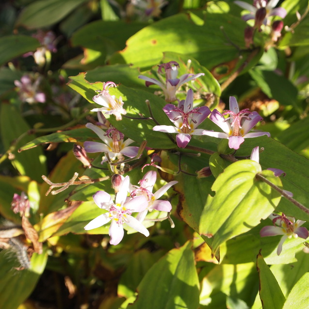 秋のお花が満開_a0292194_16115614.jpg