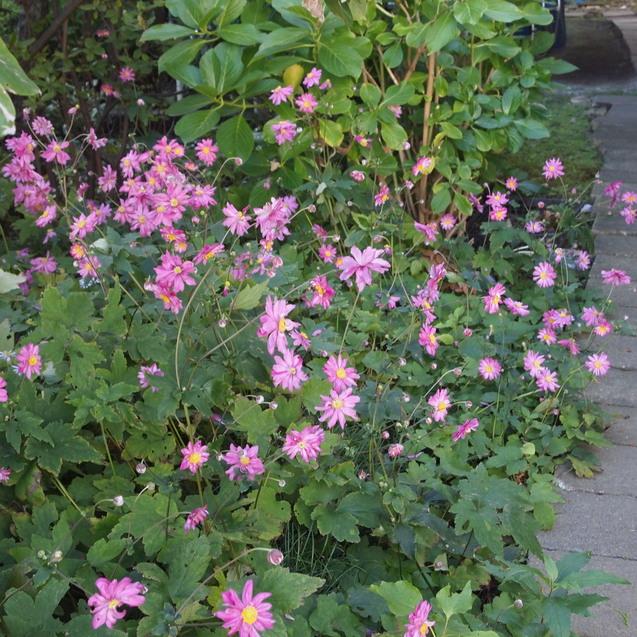 秋のお花が満開_a0292194_166248.jpg