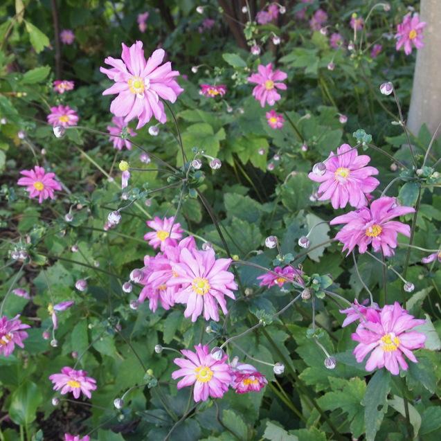 秋のお花が満開_a0292194_1692639.jpg