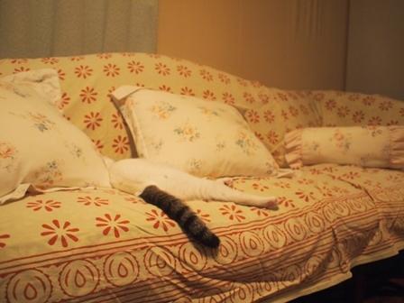 寝相七変化を眺める、飼い主バカのトコちゃん日記_b0292900_21073509.jpg