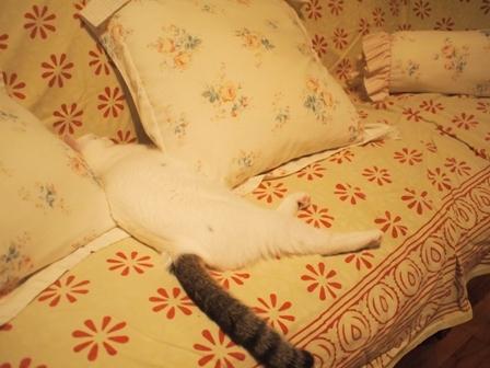 寝相七変化を眺める、飼い主バカのトコちゃん日記_b0292900_21080322.jpg