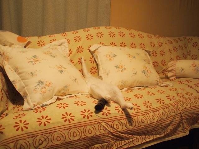 寝相七変化を眺める、飼い主バカのトコちゃん日記_b0292900_21110568.jpg