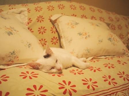 寝相七変化を眺める、飼い主バカのトコちゃん日記_b0292900_21135340.jpg