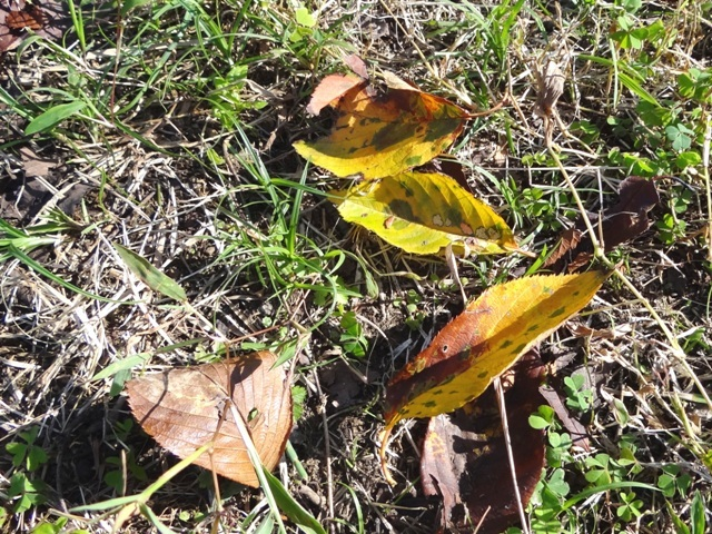 すみれば探検隊「秋の絵本づくり」_b0049307_22571185.jpg