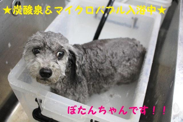 b0130018_7265389.jpg