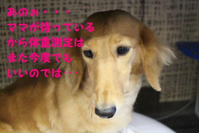 b0130018_7293559.jpg