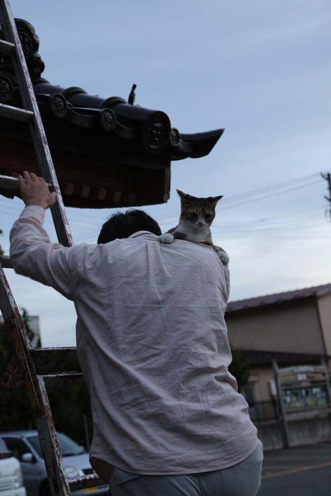 ネコ救出_c0111229_18403175.jpg