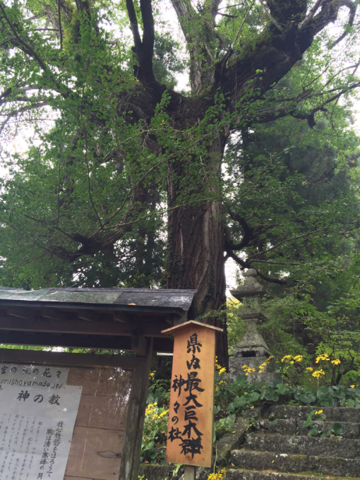 おみくじ繋がりで二所山田神社☆_f0183846_19423807.jpg