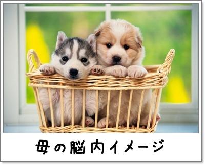 d0013149_01183834.jpg