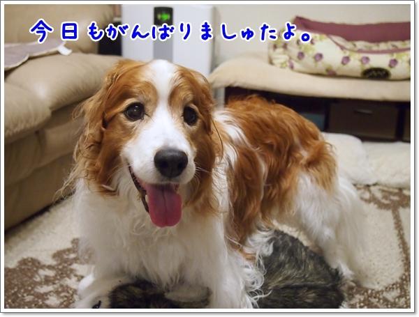 d0013149_01184932.jpg