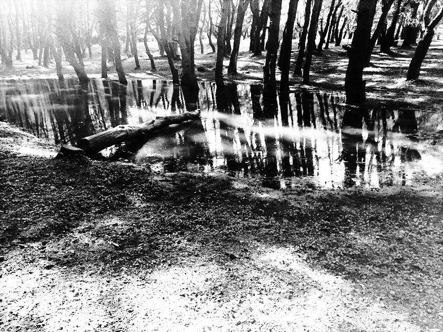 【レポート】本栖湖キャンプ場① ~カヌーと何もしないキャンプ 前編_b0008655_17070454.jpg