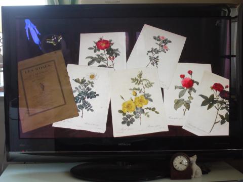 NHK BSプレミアム 《ばらのささやき〜創られた美の物語》_e0356356_19231299.jpg