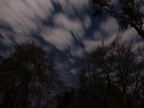 4日目: モロンダバ(バオバブ&キリンディ国立公園)_a0207588_22221742.jpg