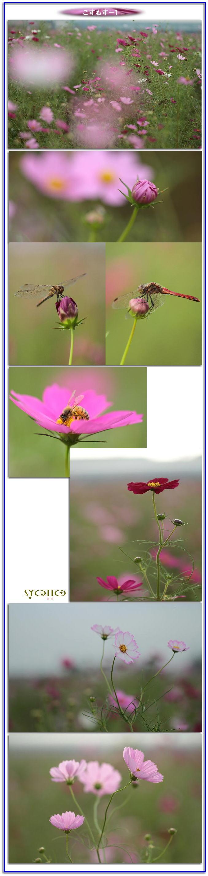 f0164592_16331588.jpg