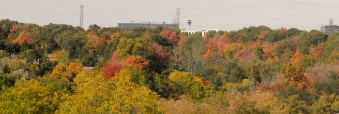 秋の風景_d0000995_6402562.jpg