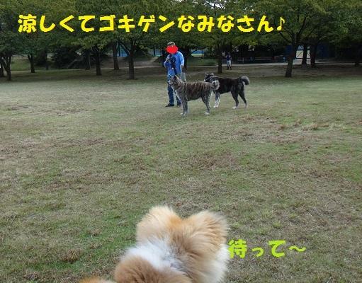 f0121712_17454127.jpg