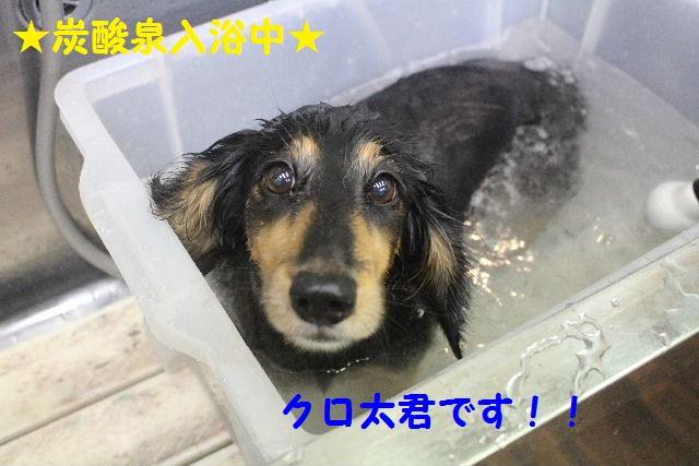 b0130018_212519.jpg