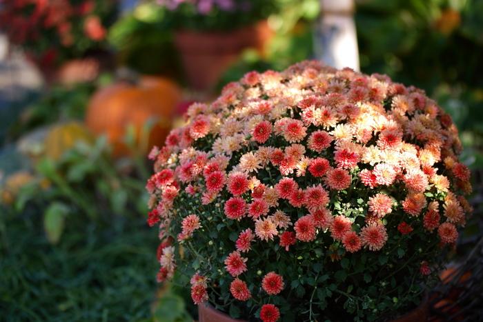 秋のガーデン_e0169421_20553999.jpg