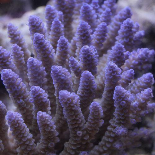 海水魚・サンゴアップ完了しています!_d0221436_22533071.jpg