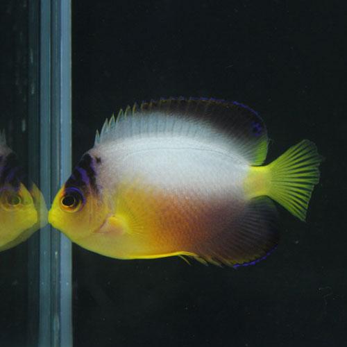 海水魚・サンゴアップ完了しています!_d0221436_22554097.jpg