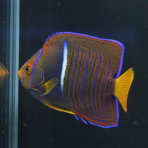 海水魚・サンゴアップ完了しています!_d0221436_22555173.jpg