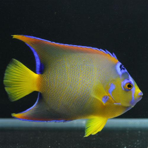 海水魚・サンゴアップ完了しています!_d0221436_2256021.jpg