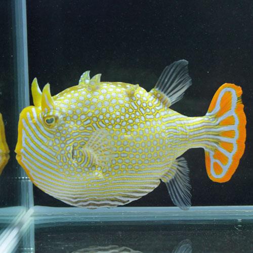 海水魚・サンゴアップ完了しています!_d0221436_22562930.jpg
