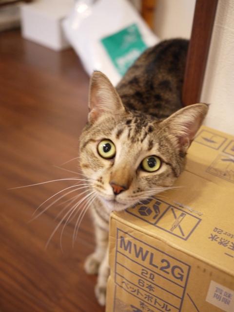 猫のお留守番 がうくん編。_a0143140_2132277.jpg