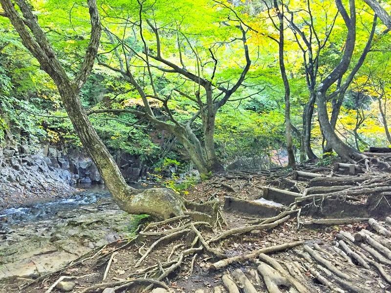 安達太良山は どぴーかん(^^♪_c0261447_21372188.jpg