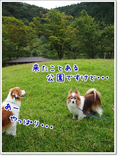 d0013149_00201676.jpg