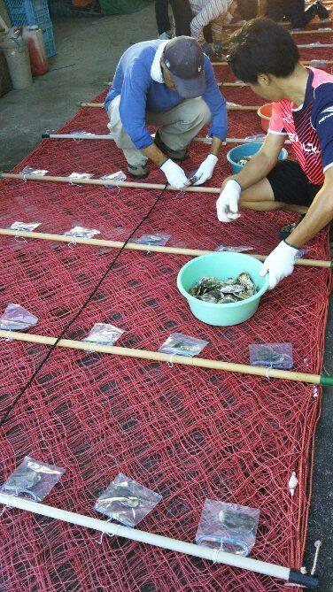 海苔の種付けのお手伝いに行ってきました_e0184224_09483607.jpg