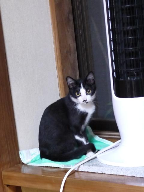 猫のお留守番 にこくん編。_a0143140_2333840.jpg