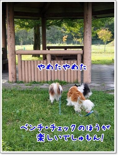 d0013149_00002402.jpg