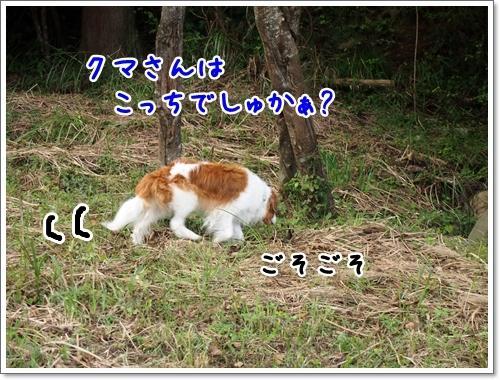 d0013149_23125529.jpg