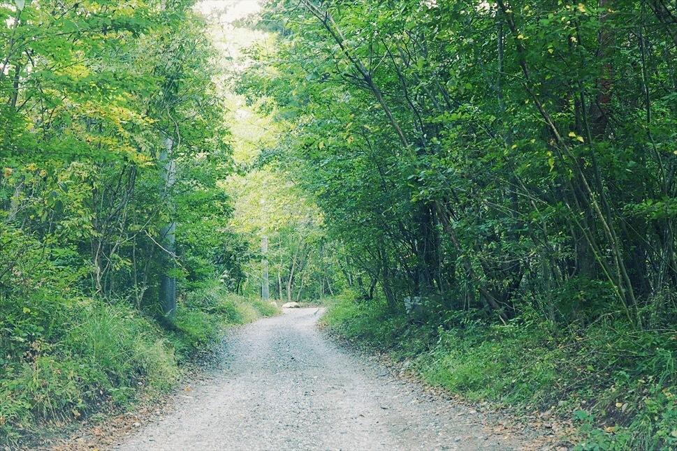 【レポート】Foresters Village Kobitto(フォレスターズビレッジ・コビット 南アルプス)キャンプ編 ① ~やはりコビットは「ナチュラルテクスチャー」の宝庫であることが変わらない_b0008655_23520150.jpg