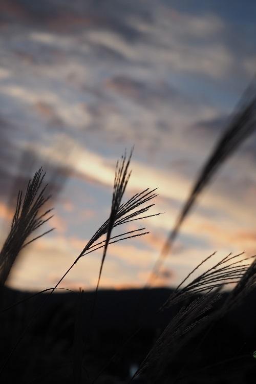 すすき野原の夕景_a0292060_13384111.jpg