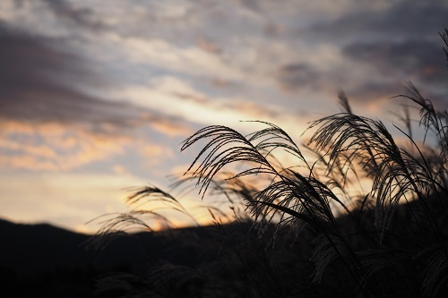 すすき野原の夕景_a0292060_13422982.jpg