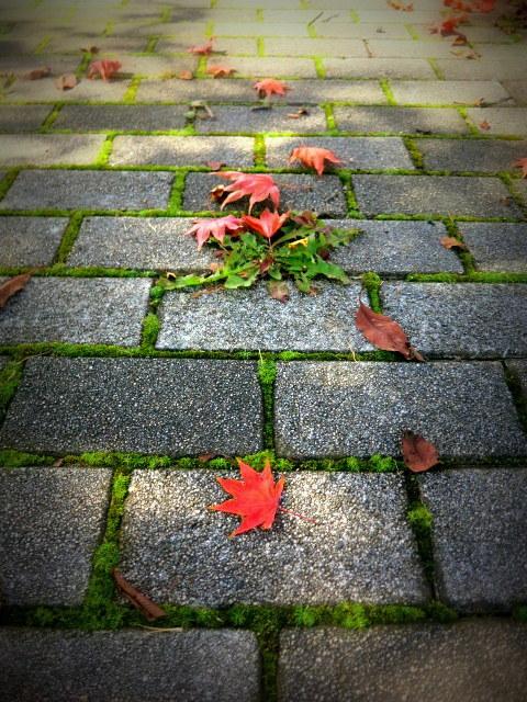 紅葉の始まった旧軽でランチ * La montagnon/ラ・モンタニョン_f0236260_21081356.jpg