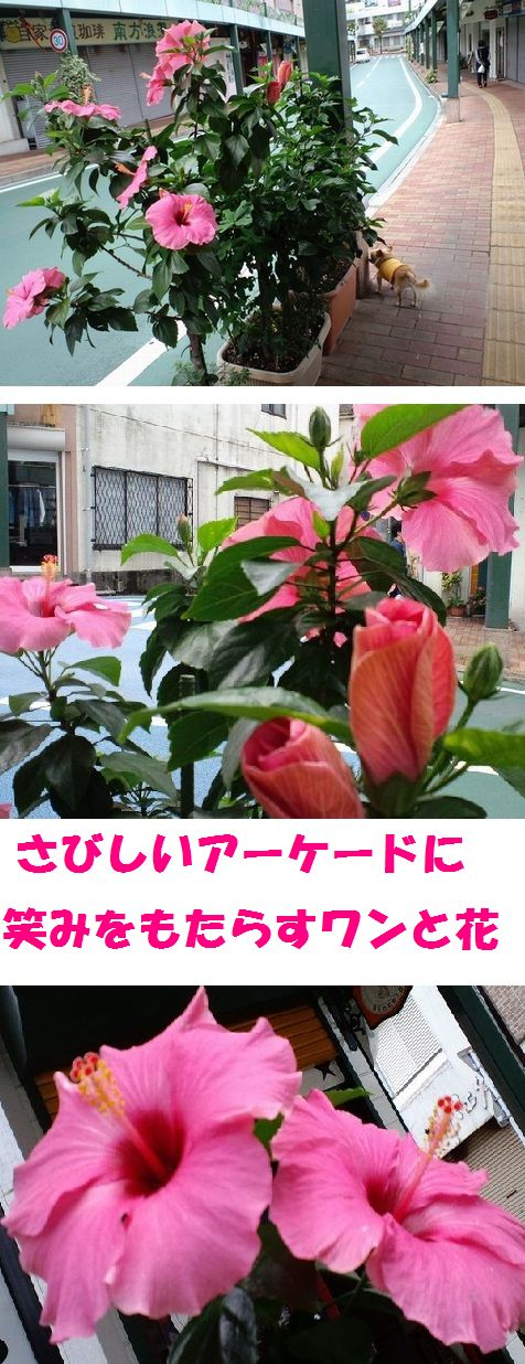 c0025171_311445.jpg